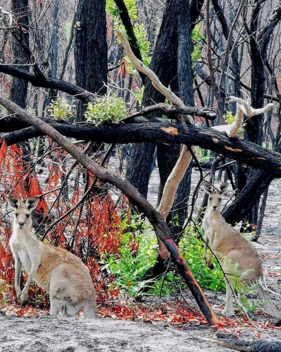 Животът винаги намира начин: Снимки след австралийските горски пожари 5